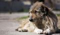 «Если у Вас нет собаки…»- нардеп Брагар от Слуги Народа предложил пенсионерке продать собаку чтоб заплатить за коммуналку