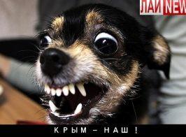 Собачья реакция от собачьей редакции ЛайНьюс